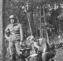 Las miedzy Rybnikiem a Żorami.
