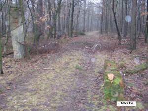 Droga i pozostałości bramy wjazdowej poligonu